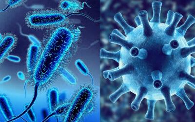 Qual é la differenza tra virus e batteri?